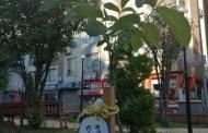 Mersin Şubemiz Gezi Direnişinde Hayatını Kaybedenlerin Anısına Fidan Dikti